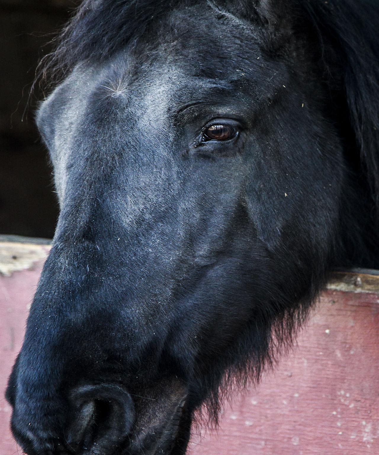 05_horsestable_melles