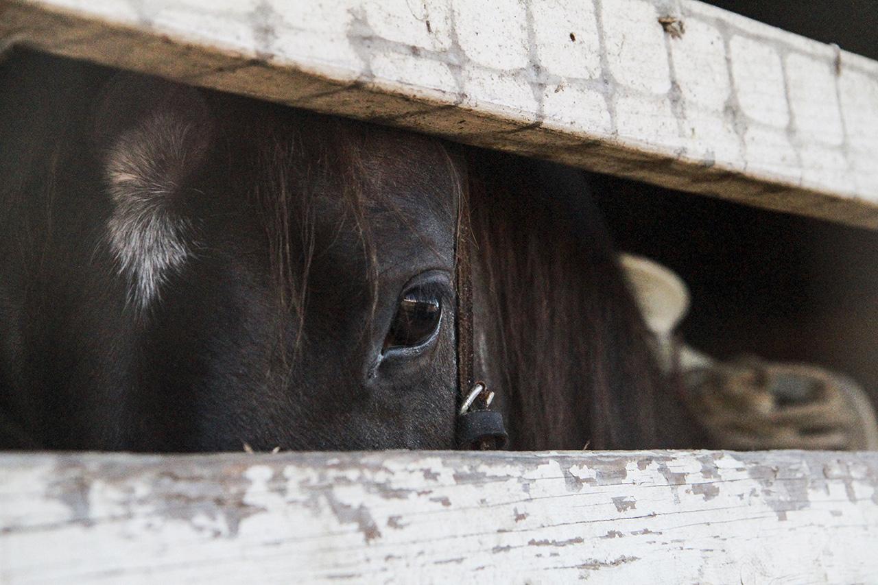 10_horsestable_melles